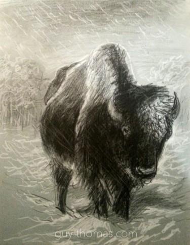 Bison debout